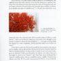 Darwin`s Corals, Seite 22